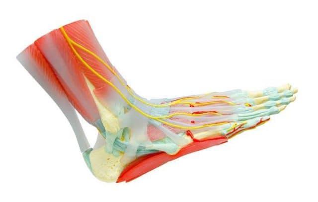 leg-arm-pain-gam1983