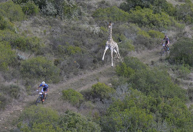Image from 2016 Cape Pioneer Trek by Zoon Cronje from www.zcmc.co.za #GondwanaGlory