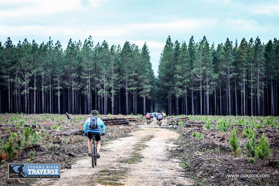 6-riders-approaching-pine-plantation