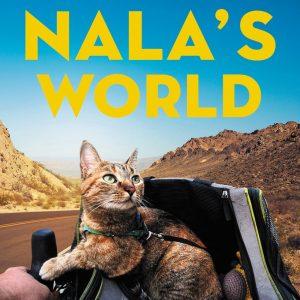 nala dean cat kitten